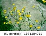 Bright Yellow Flowers...