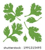 set of green leaves of cilantro....   Shutterstock .eps vector #1991315495