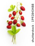 wild strawberry branch isolated ...   Shutterstock . vector #1992843488