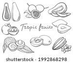 hand drawn tropical fruits set  ... | Shutterstock .eps vector #1992868298