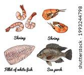 sea food. vector drawing of...   Shutterstock .eps vector #1993244798