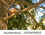 Squirrel With A Nut On The Tree ...