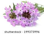 Delicate Purple Flowers Verben...