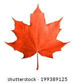 Red Maple Leaf Isolated White...