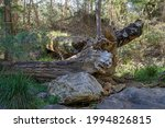 Large Fallen Trees And Rocks On ...