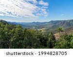 View Past Sub Tropical Trees In ...