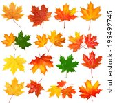 Collection Of Autumn Leaf...