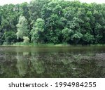 Beautiful Fresh Green Forest...