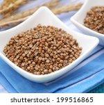 coriander | Shutterstock . vector #199516865