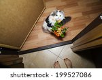 Cat Giving Flowers To The...
