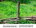 Wicker Fence And Green Meadow . ...