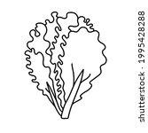 lettuce. vegetable sketch. thin ... | Shutterstock .eps vector #1995428288