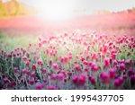 blooming fields of red crimson... | Shutterstock . vector #1995437705