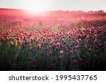 blooming fields of red crimson... | Shutterstock . vector #1995437765