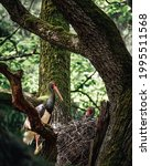 Black Stork Male And Female In...