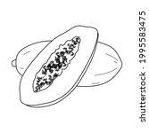 papaya fruit illustration.... | Shutterstock .eps vector #1995583475