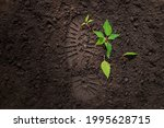 Small photo of young green sprout on the ground next to the footprint of a man's shoe, trample the shoots of a plant, the concept of environmental protection, nature, trees, plants, earth day