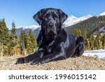 Calm, black labrador retriever dog lays on the dirt with the Arapaho national forest behind him and the snow-capped Rocky Mountains in the distance.