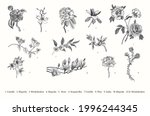 spring flowers. vector vintage... | Shutterstock .eps vector #1996244345