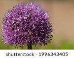 macro photography of purple...