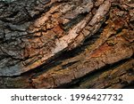 View Of Curving Textured Bark...