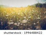 summer meadow landscape.... | Shutterstock . vector #1996488422