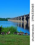 Small photo of A gaggle of geese feeds on grass by the Columbia Wrightsville bridge in Columbia, Pa.