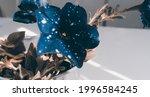 Blue Retro Flower Petunia ...