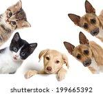 Stock photo set pet looks 199665392