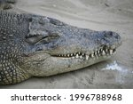 A Crocodile Is Sunbathing To...