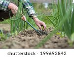 Woman Senior Gardening With...