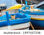 Two Cats In Colourful Boat On...