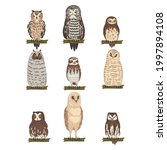 different specie of owl as...   Shutterstock .eps vector #1997894108