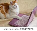 Stock photo cat put his paw on a computer keyboard and stares at the monitor 199857422