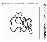 thyroid line icon. endocrine...   Shutterstock .eps vector #1998678755
