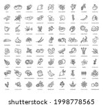 superfoods line vector icons.... | Shutterstock .eps vector #1998778565