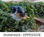 Sea   Snail Walking On The...