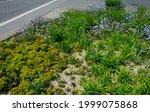 Meadow Sown Between Roads. It...