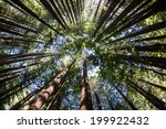 Giant Redwood Forests Only...