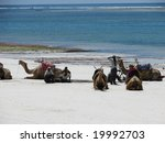 Diani Resort (30 km south of Mombasa), Kenya, Africa 02 May 2007 : A group of camels with a group of men resting in the beach of India Ocean. - stock photo