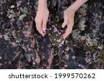 Outstretched Hands Against The...