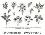 exotic palms. vector vintage... | Shutterstock .eps vector #1999694642