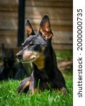 old black male miniature... | Shutterstock . vector #2000000735