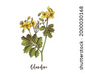 Branch Of Celandine. Medicinal...