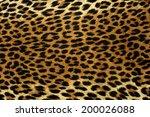 Close Up Spots Pattern Of A...