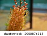 Flowerbed With Tall Perennial...