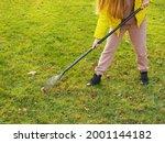 Girl Rakes Grazing Foliage On...