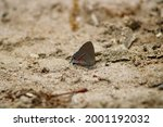 A Red Banded Hairstreak...