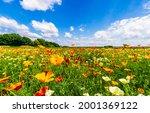 Flower meadow under a clear summer sky. Summer meadow flowers. Meadow flowers in summer time. Summer meadow flowers landscape