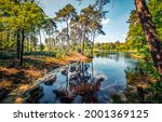 Small photo of Forest river on a clear summer day. River in forest. Forest river landscape. Pine forest river landscape
